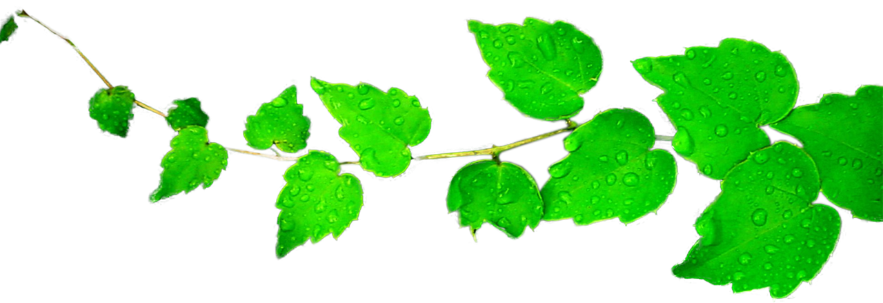 Devient clip. Leaves clipart png by