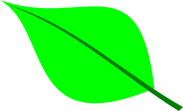 single green leaf png