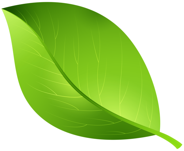 Leaf clipart clear background. Green transparent png clip