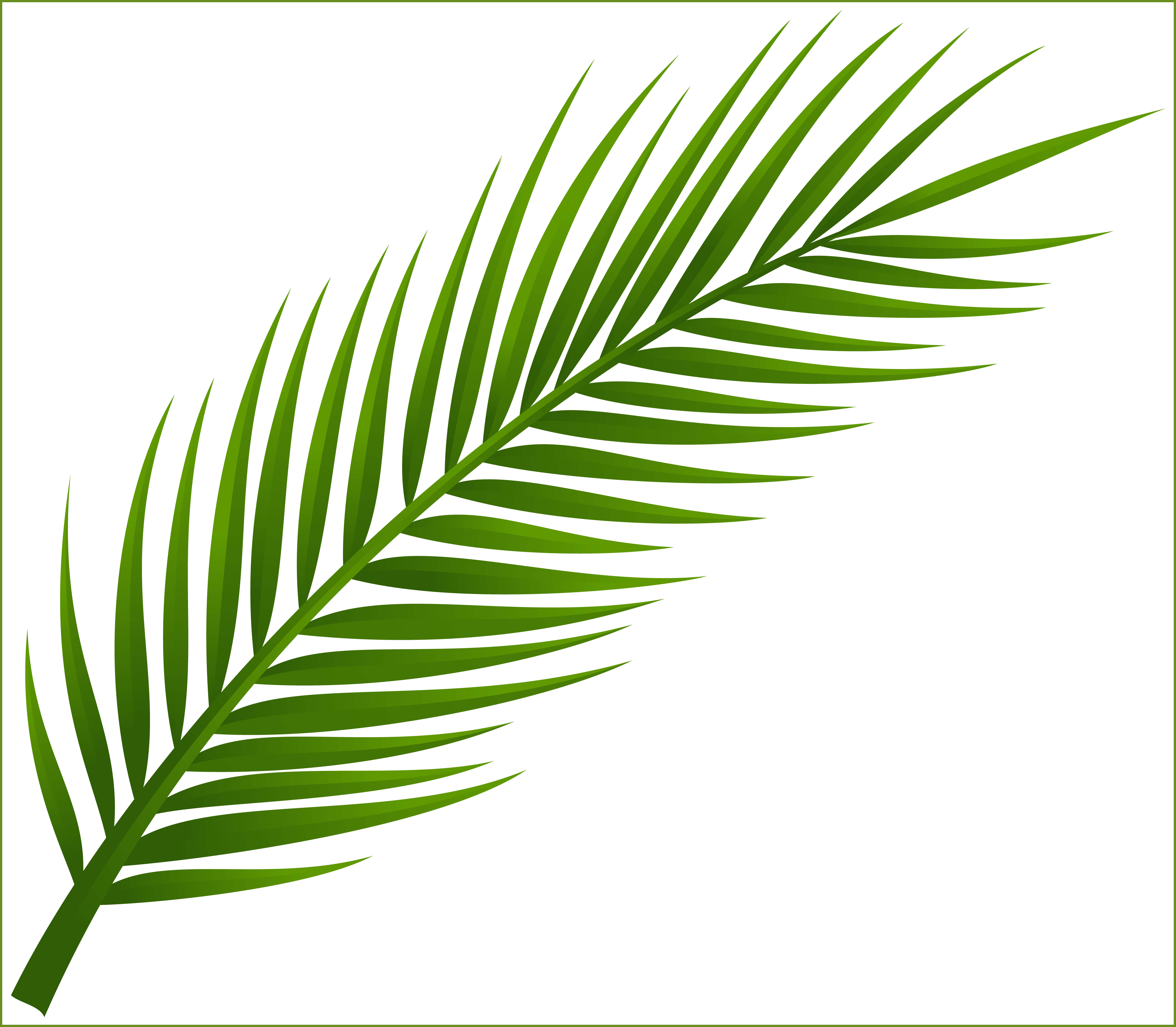 Leaf clipart coconut tree. Download png image with