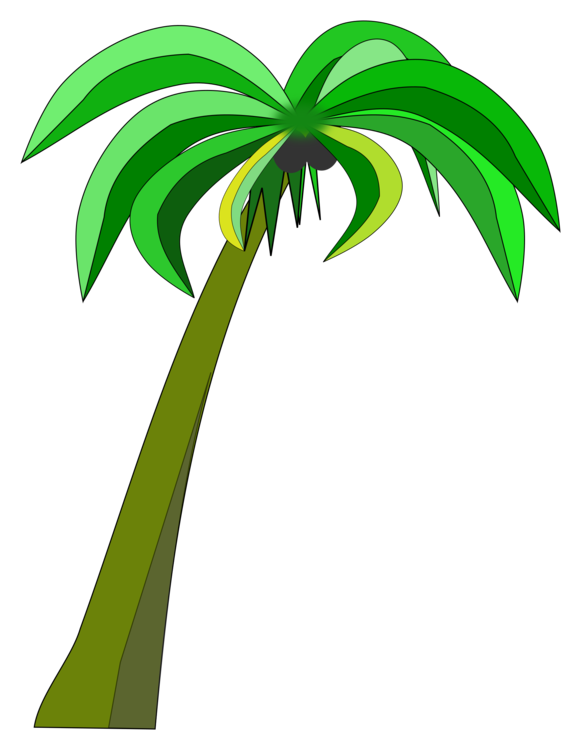 Palm trees can stock. Leaf clipart coconut tree png free stock