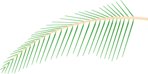Leaf clipart coconut tree. Clip art at clker