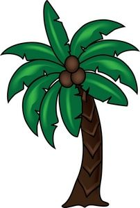 palm clipart coconut plant