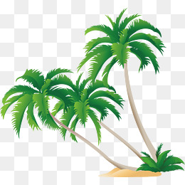 Leaf clipart coconut tree. Png vectors psd and