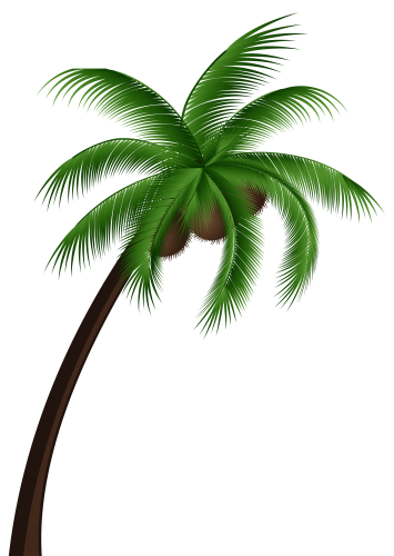 drawing beach coconut tree