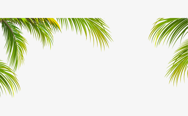 Green border texture vector. Leaf clipart coconut tree picture free stock