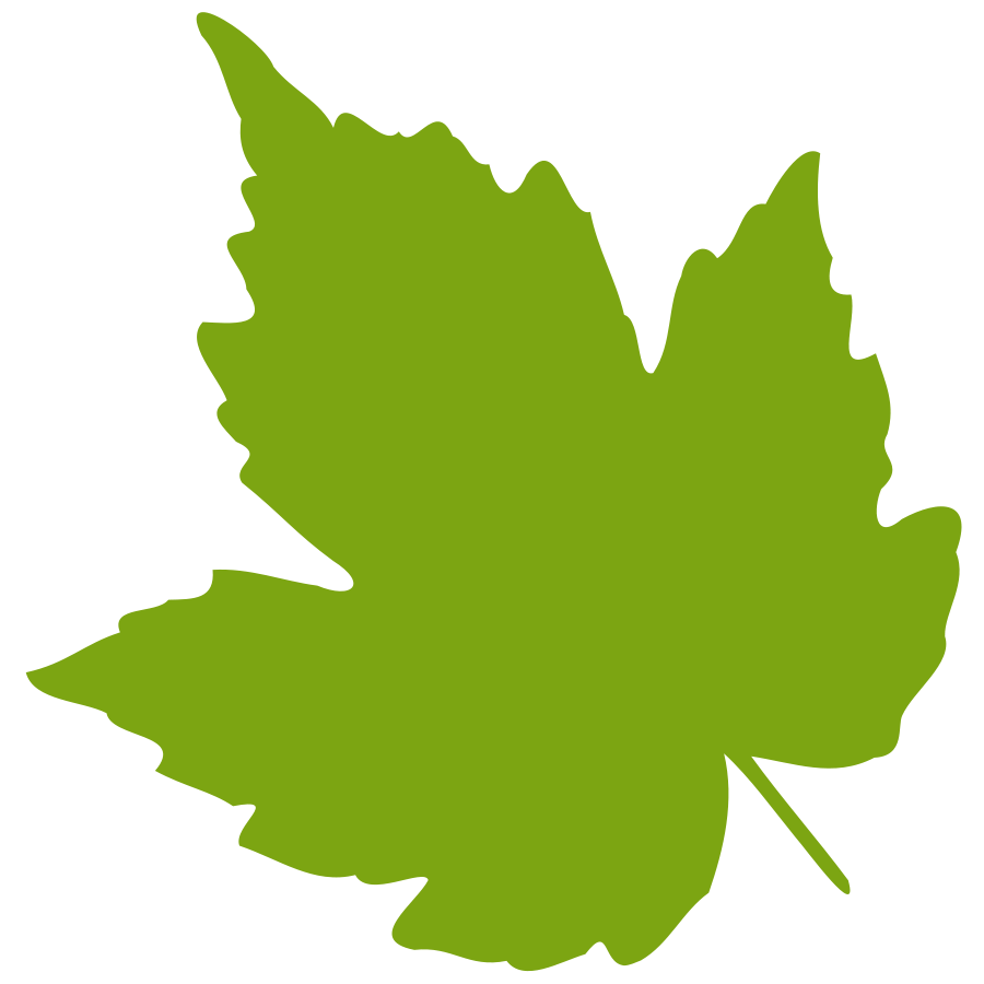 Vector hd leaf. Free maple clipart download