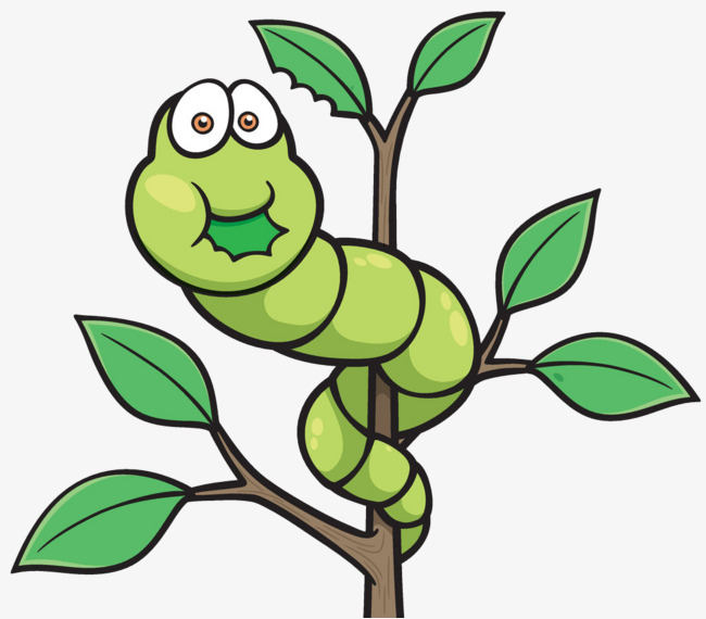 Leaf clipart insect. The insects eat leaves
