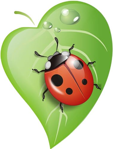 Leaf clipart insect. Best lady bug