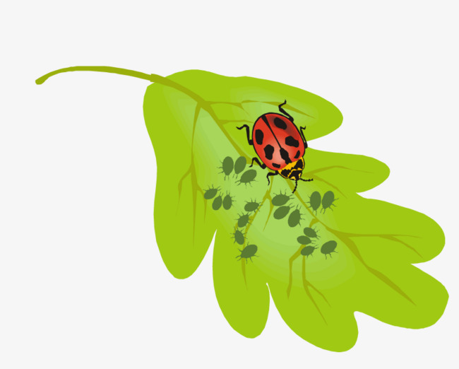 Leaf clipart insect. Insects on the green