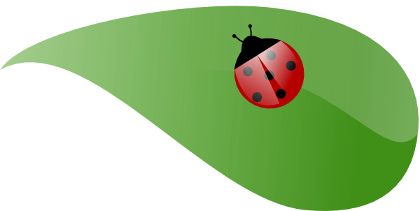 Ladybug on . Leaf clipart insect clip art transparent library