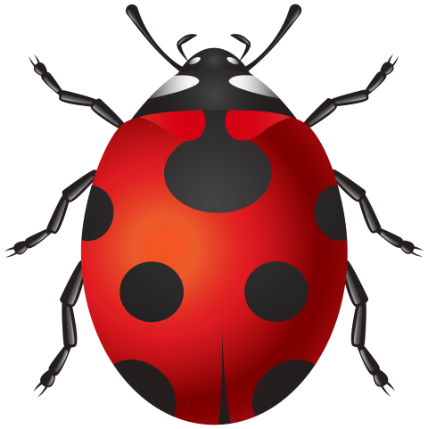 Download png photo toppng. Leaf clipart ladybug png library library