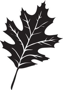 Maple clipart acorn leaf. Image the silhouette of