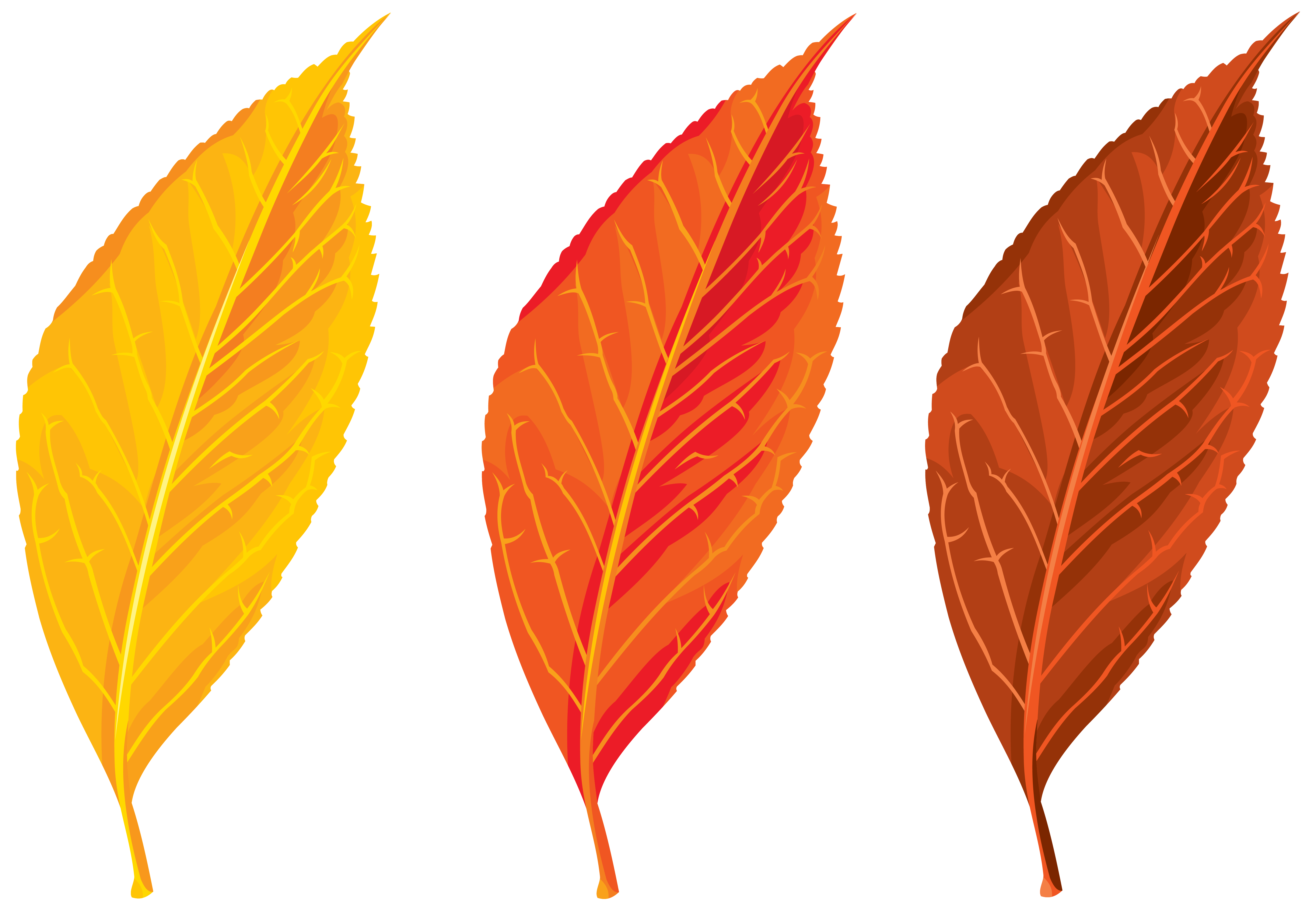Leaf clipart winter. Download autumn free png