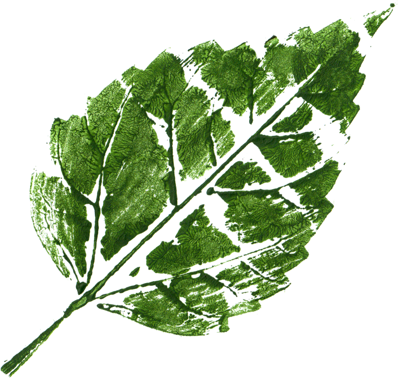 Leaf texture png. Printed transparent onlygfx