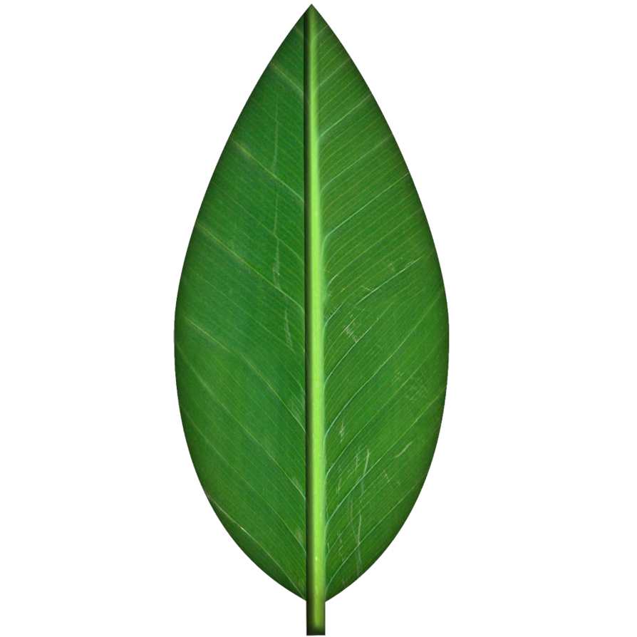 Leaf texture png. Green by spiralgraphic on