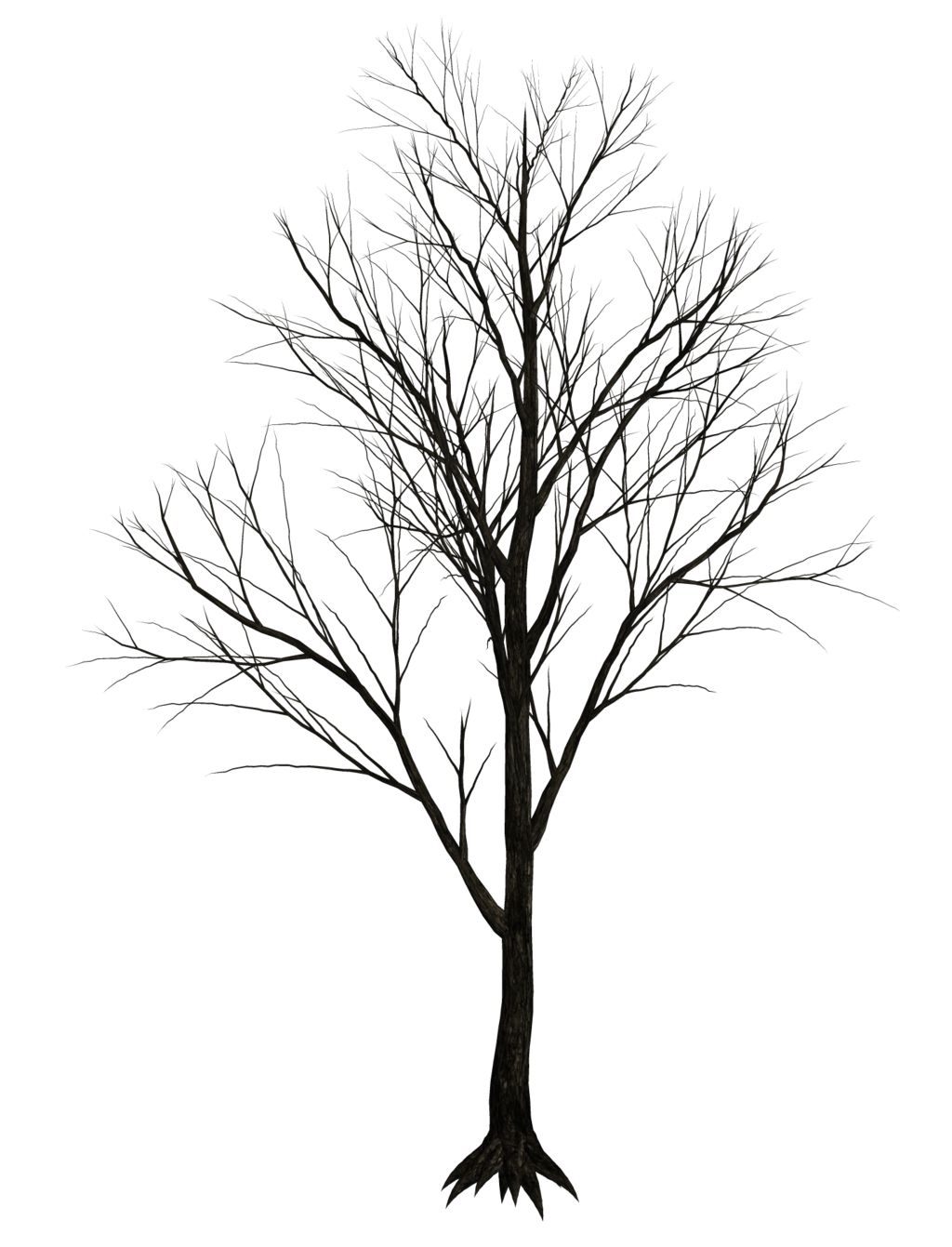 Leafless tree png. Texture pinterest