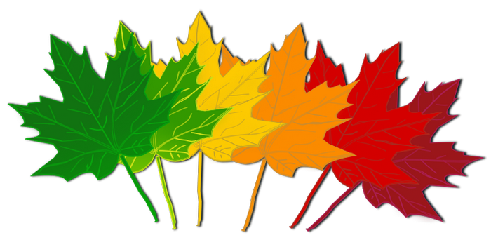 Leafs falling png. Maple leaf clipart fall