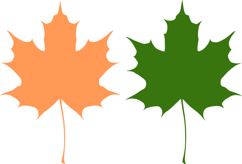 Free maple leaf download. Leave vector vector free