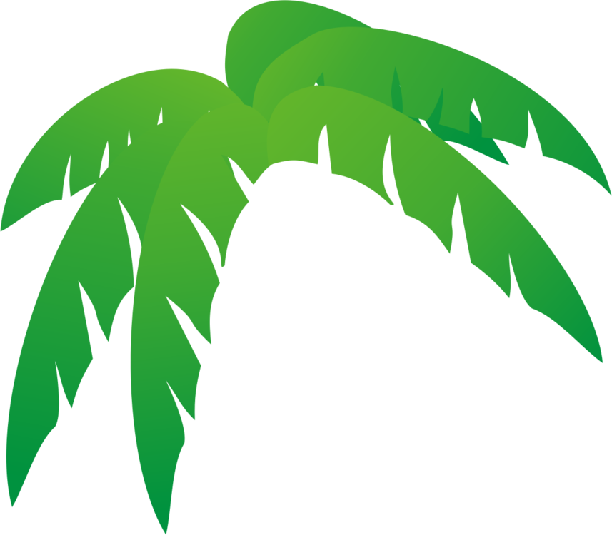 Leave vector frond. Leaf tree palm branch