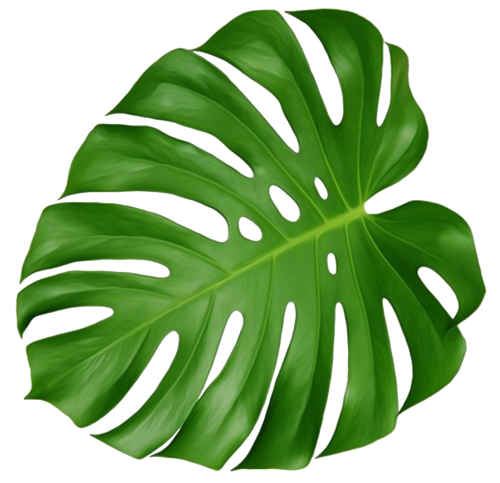 Leave vector monstera. Pin by colin o