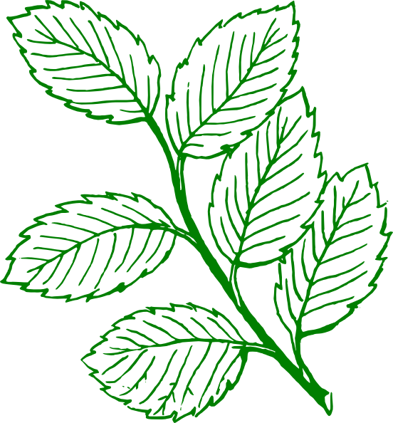 Peppermint drawing foliage plant. Image green outlined mint