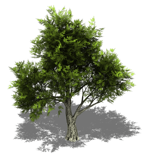 park trees png