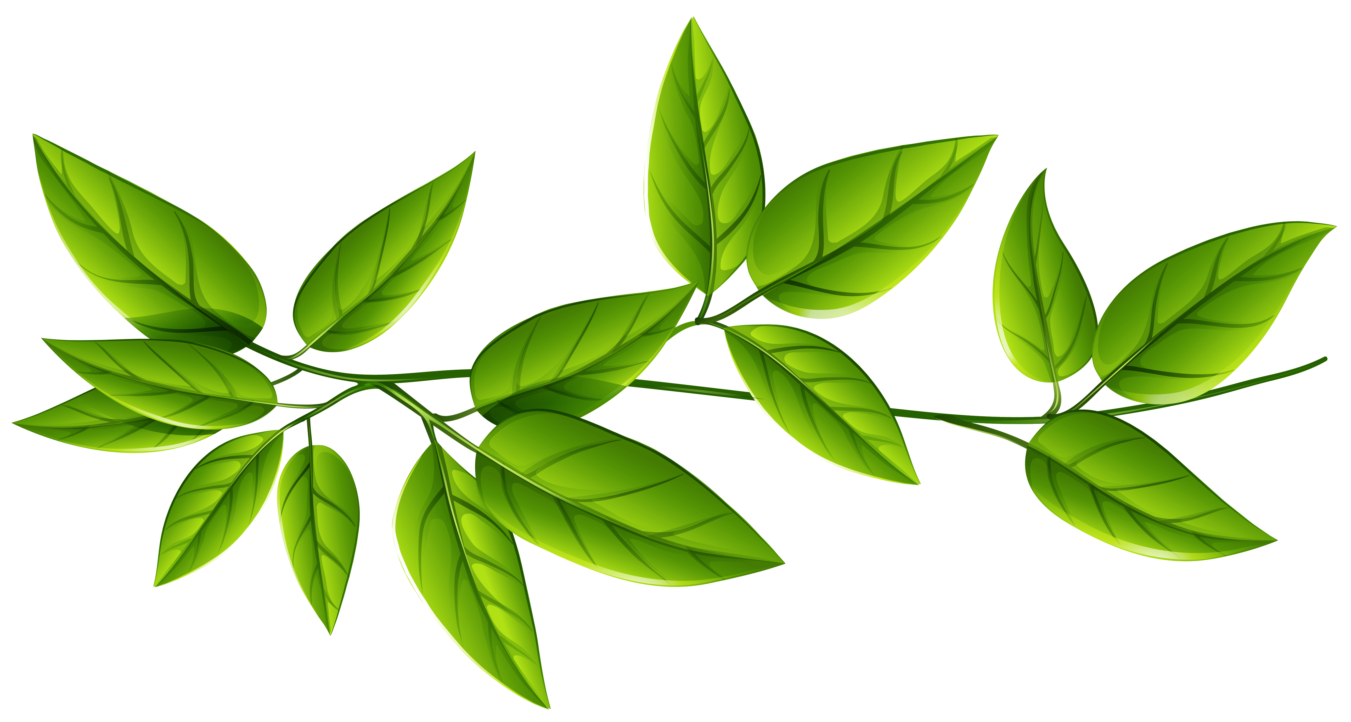 Green leaves image gallery. Leaf png banner stock