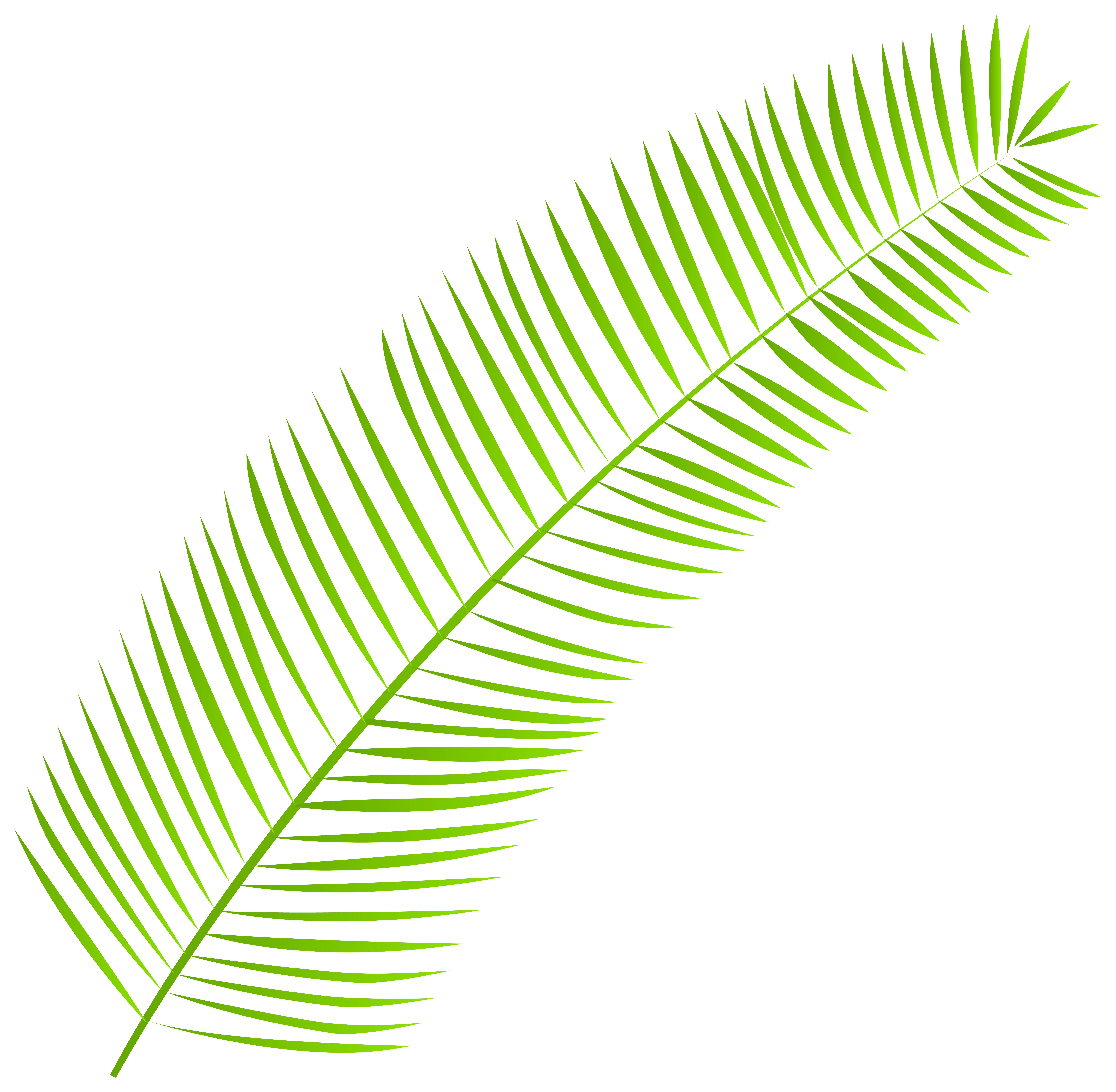 Leaves clipart palm branch. Leaf png clip art