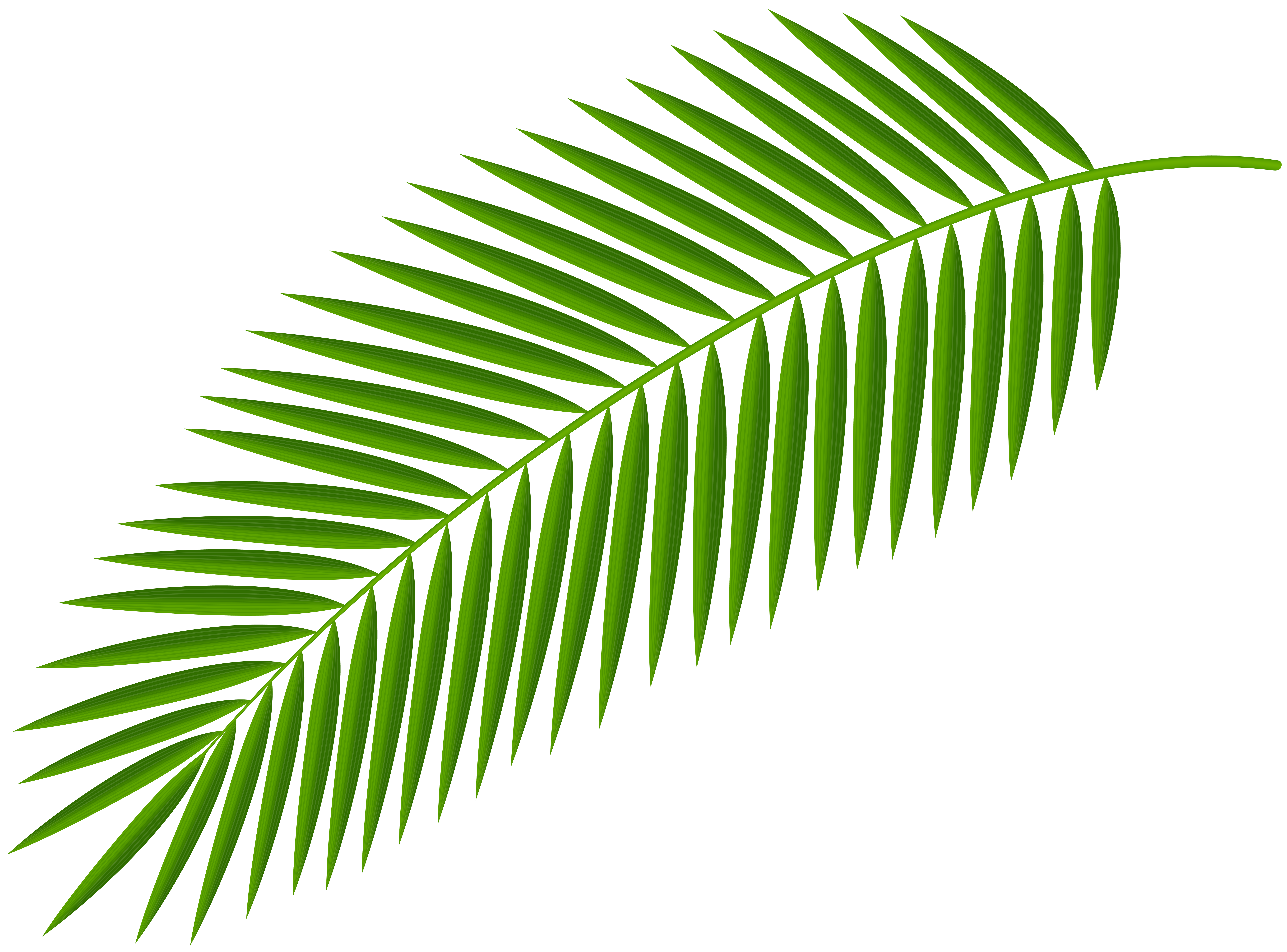 palm tree branch png