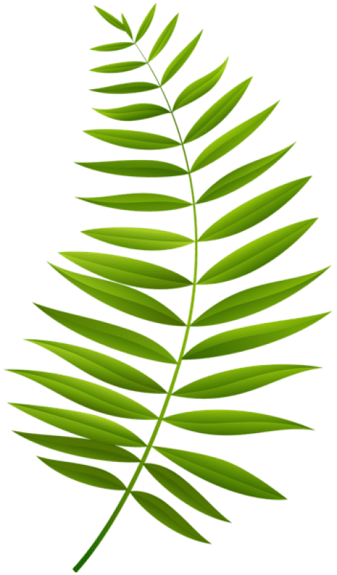 Transparent fern plant leaves. Download palm branch clipart