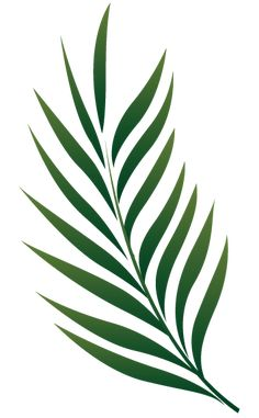 Leaves clipart palm branch. Image free cliparts that