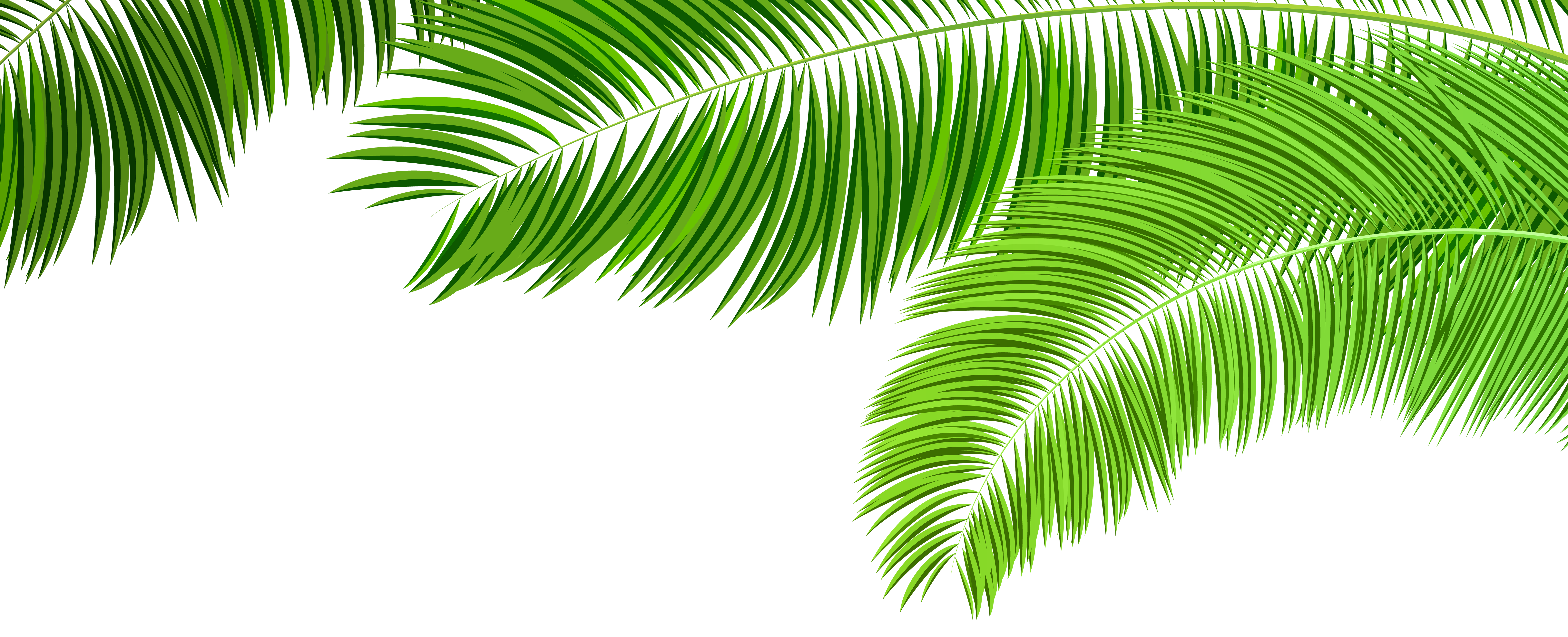 Palm tree leaf png. Branches decoration clip art