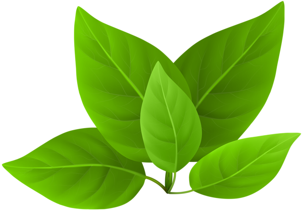 Green leaves png. Clip art gallery yopriceville