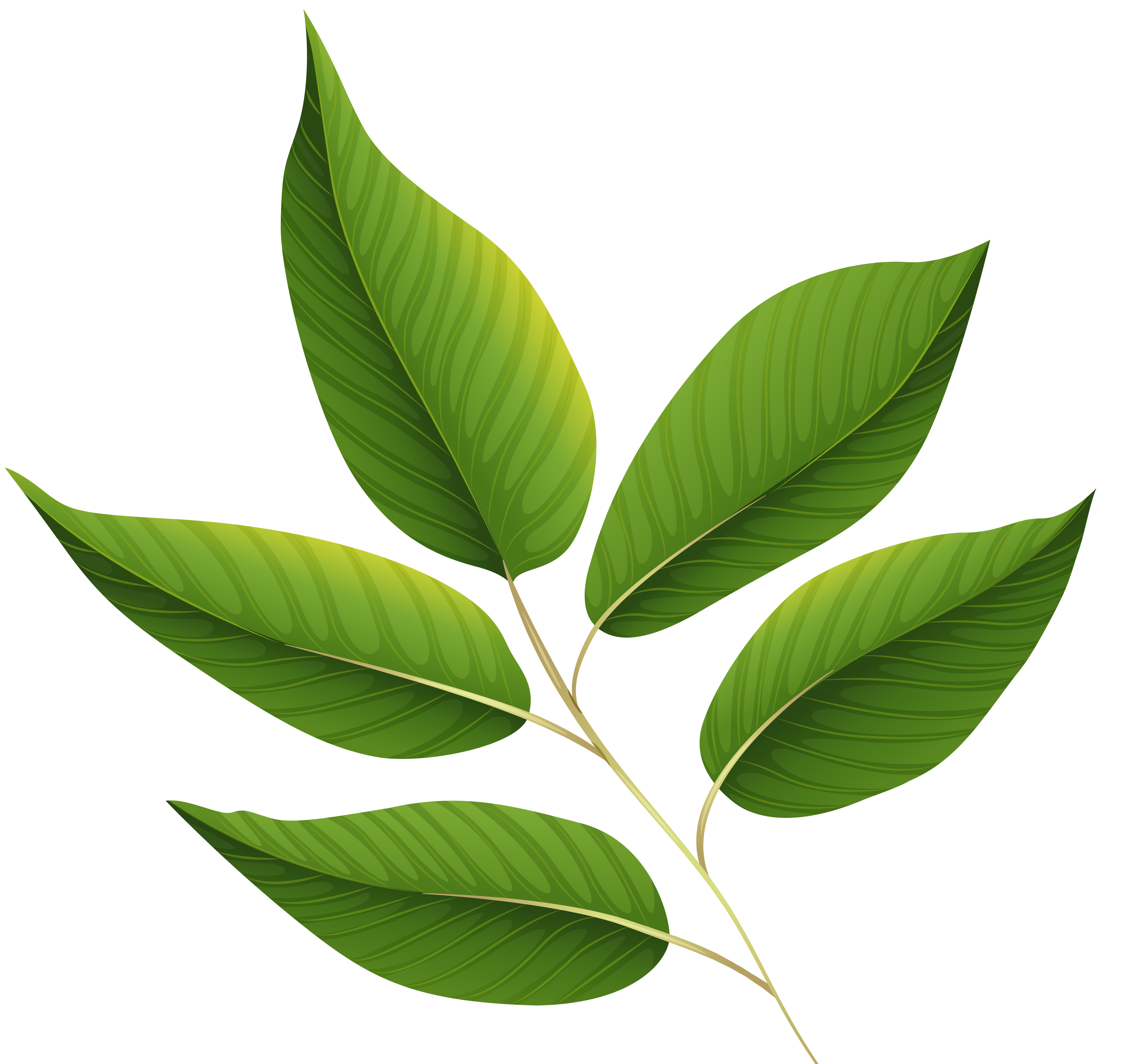 Leaves clipart png. Green image gallery yopriceville