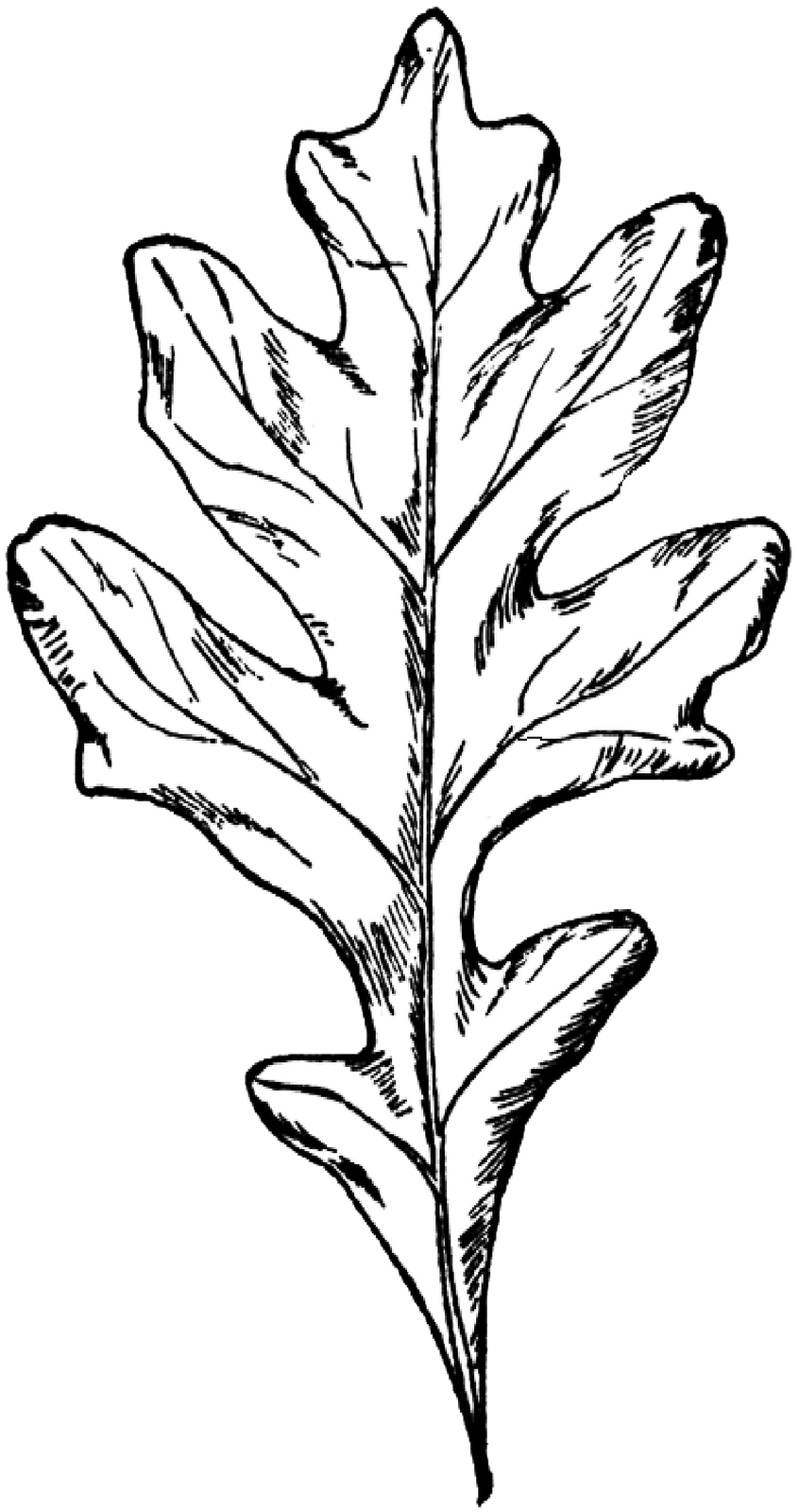 portfolio drawing leaf