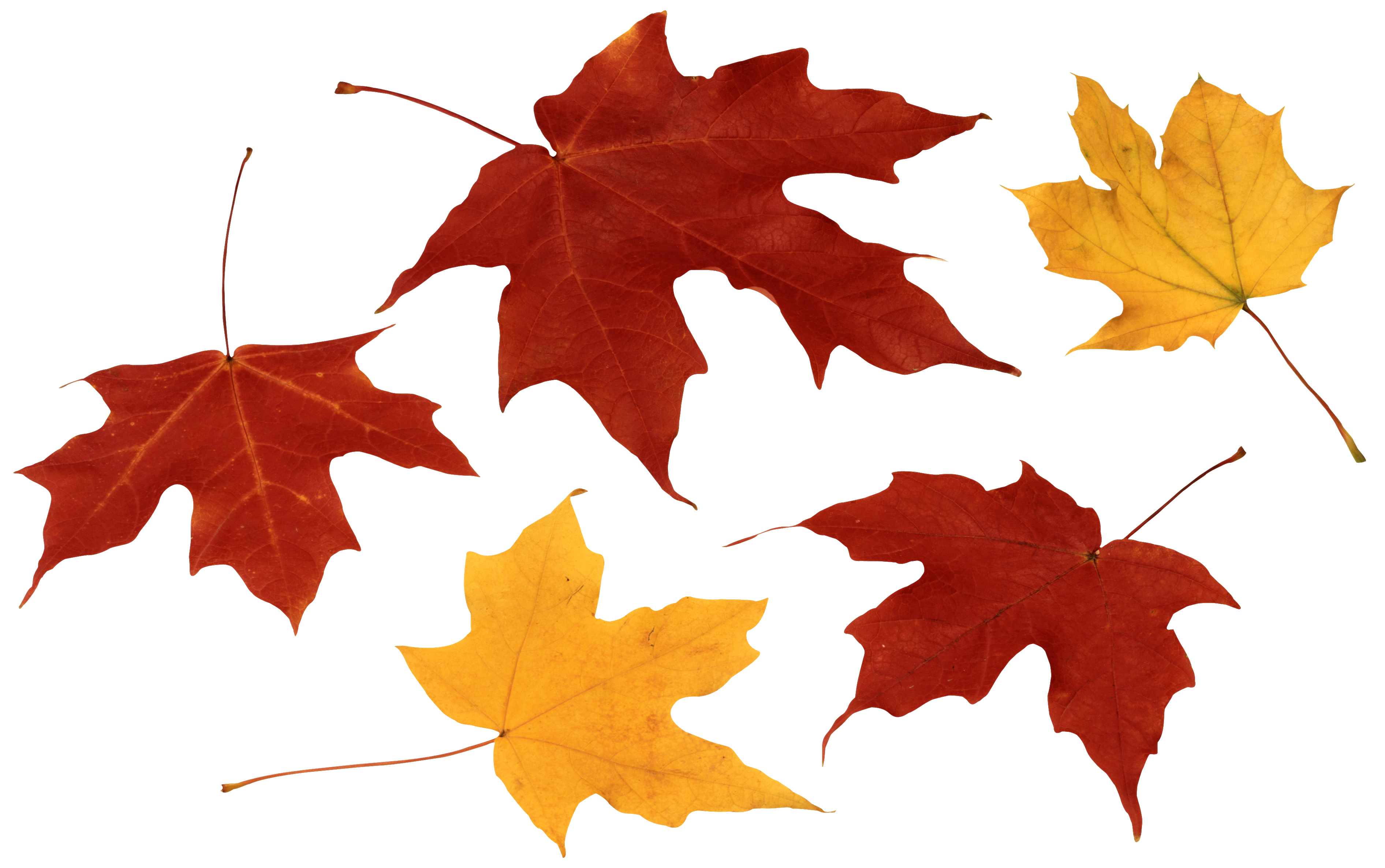 Png autumn leaves falling. Fall clipart gallery yopriceville