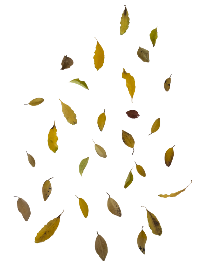 Leaf overlay free to. Leaves falling png clipart transparent download