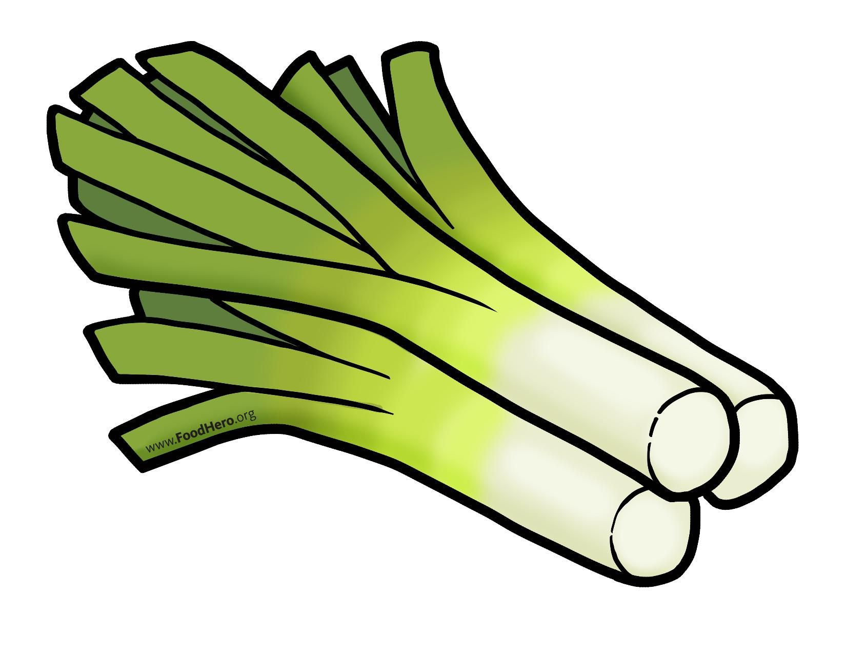 Leeks. Colored illustration in
