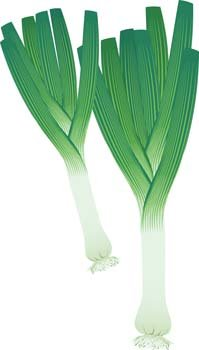 Leeks. Free s clipart and