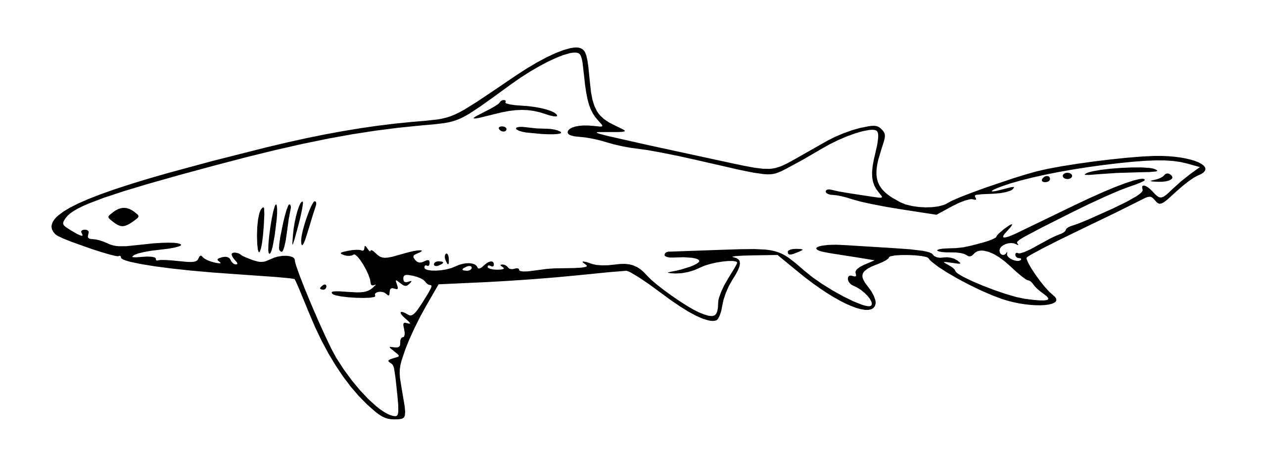 Drawing nemo shark head. Free great white clipart