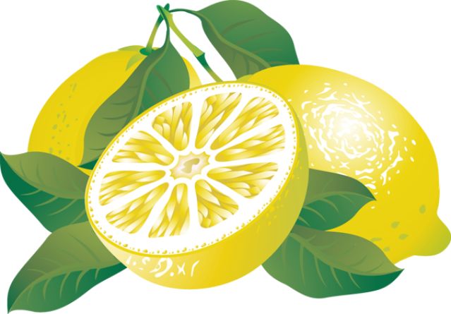 Lemon clipart lemon tree. Free cliparts download clip