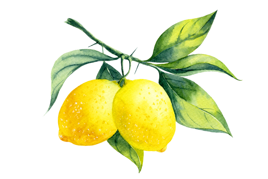 Lemonade watercolor png. Lemon pinterest envy food