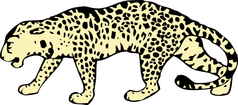 Cheetahs drawing head. Leopard felidae tiger cheetah