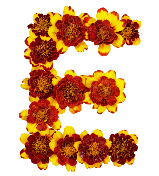 Letters with flowers png. Flower font images