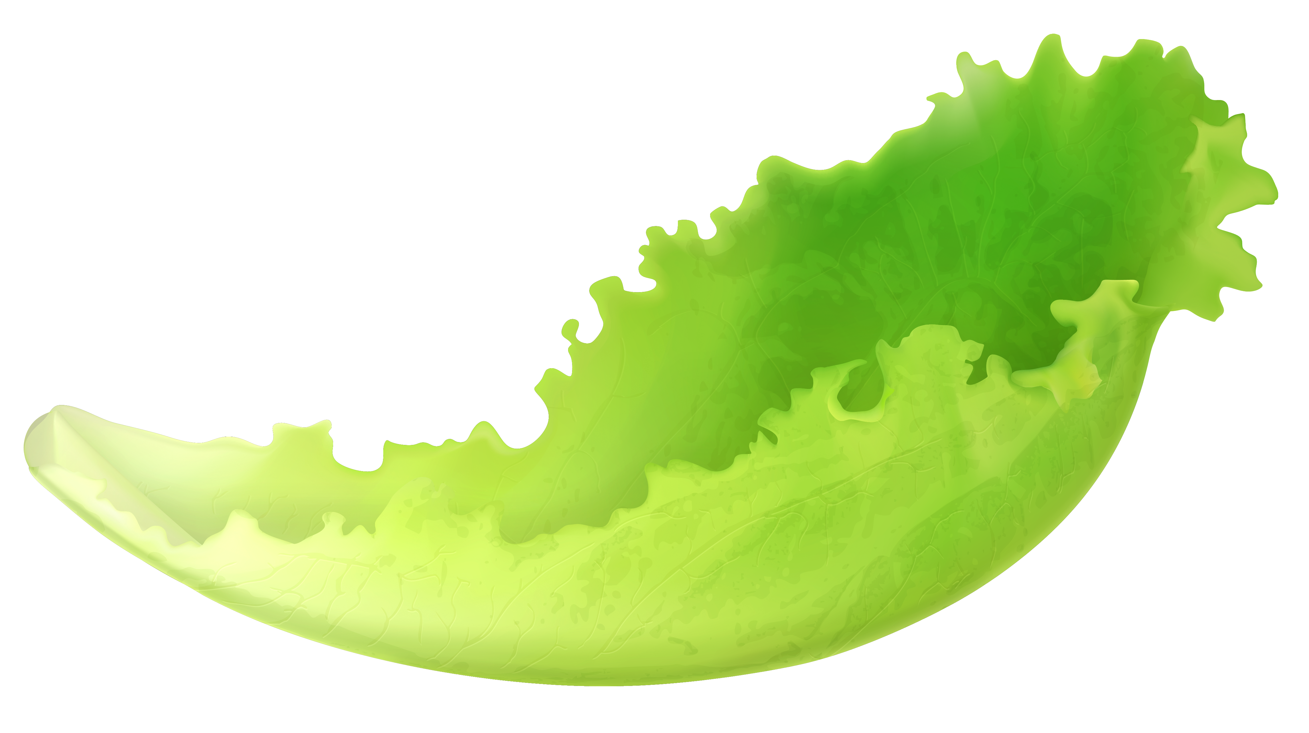 Lettuce leaf png. Clipart gallery yopriceville high