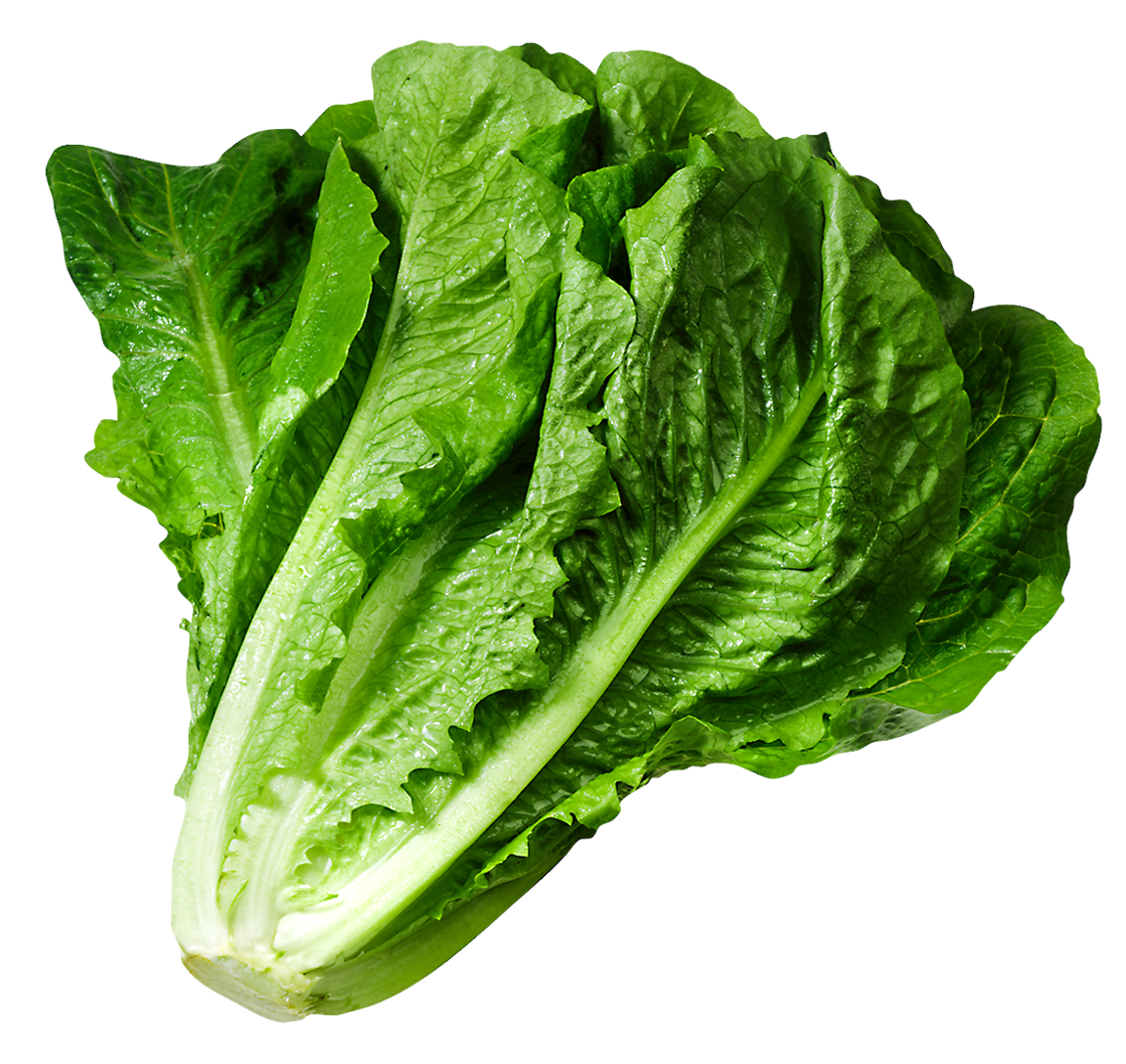 Lettuce cartoon png. Picture gallery yopriceville high