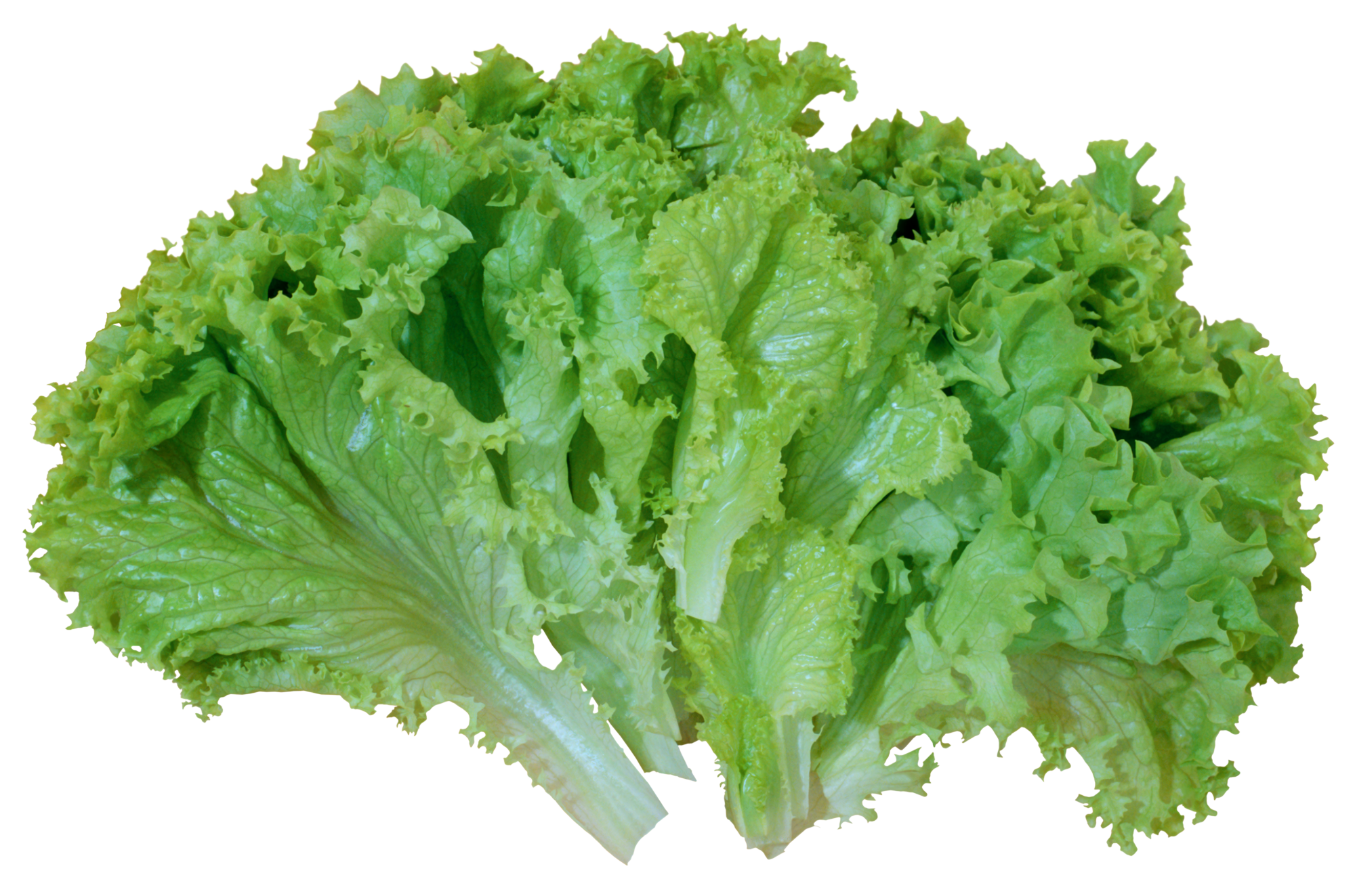 Lettuce cartoon png. Green salad picture gallery