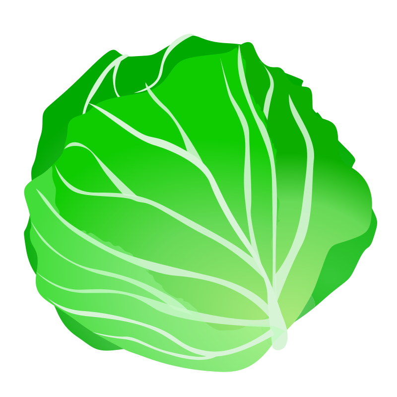 Cabbage clipart cabbage plant. Lettuce at getdrawings com