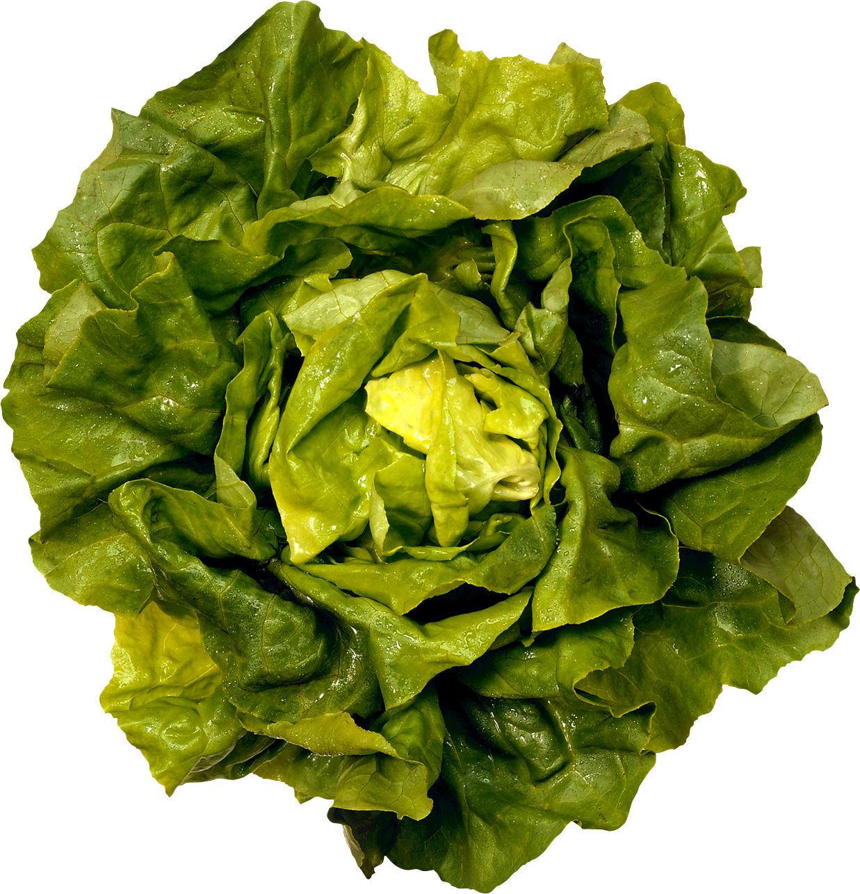 Lettuce garden png. One isolated stock photo